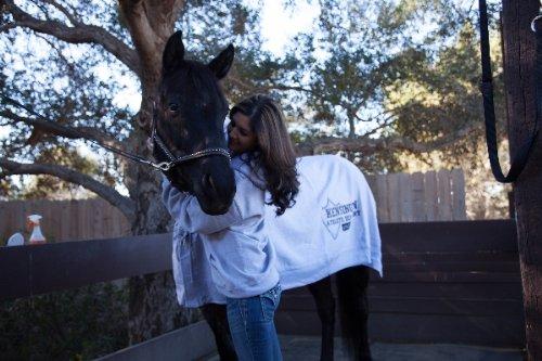 Kensingtonジャージースポーツクーラー B00BY8C8HA Small Sweatshirt Grey B00BY8C8HA Small Grey Sweatshirt Grey Small, 配送員設置:6937d44c --- ijpba.info