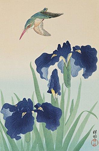 japanese-art-print-kingfisher-and-iris-hana-shobu-ni-hisui-by-ohara-koson