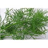 ANETO 1.000 SEMI Anethum Graveolens pianta depurativa erba aromatica pietanze sottaceti confetture