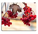 Liili Mouse Pad Natural Rubber Mousepad IMAGE ID 33485353 Guelder rose clusters