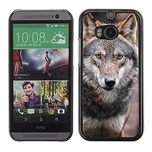 Qstar Arte & diseño plástico duro Fundas Cover Cubre Hard Case Cover para HTC One M8 ( Wolf Wild Dog Brown Forest Fairytale Eyes)