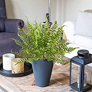 2 PCS Boston Fern Artificial Green Plants Fake Plastic Leaves Waterproof Shrubs Mimosa Venus Fern Persian Grass for Outdoor Home Table Kitchen Office Decorations 4