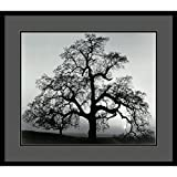 Framed Art Print, 'Oak Tree, Sunset City, California, 1962' by Ansel Adams: Outer Size 29 x 25''