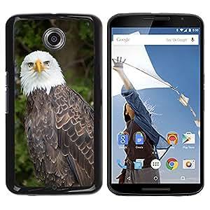 Super Stella Slim PC Hard Case Cover Skin Armor Shell Protection // M00149493 Eagle Nature Bird Predator Bald // LG Google Nexus 6