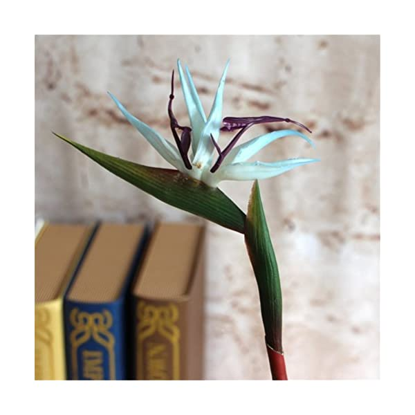 Lily-Garden-Pack-of-6-Bird-of-Paradise-Spray-Natural