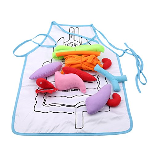 SONGLIN Anatomy Apron Human Body Organs Awareness Educational Insights Toys for Children Science Homeschool Teaching Aids