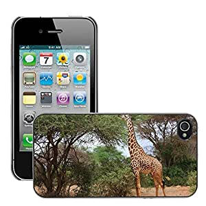 Hot Style Cell Phone PC Hard Case Cover // M00115609 Giraffe Bird Friends Animal Family // Apple iPhone 4 4S 4G