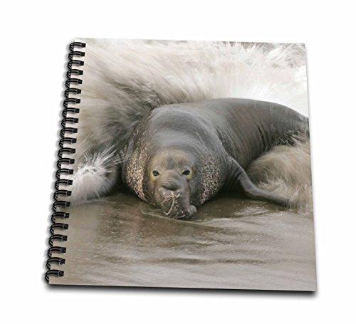 3dRose db_88181_2 California, Bull Northern Elephant Seal US05 BJA0165 Jaynes Gallery Memory Book, 12 by 12-Inch