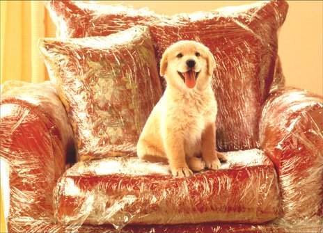 Puppy in Plastic Covered Chair Dog New Pet Card