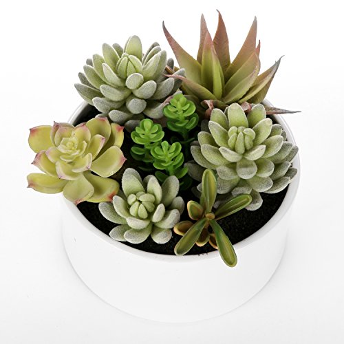 Decorative Round Faux Potted Succulents / Artificial Plant in 6 Inch Glazed White Ceramic Flower (Pot Centerpiece)