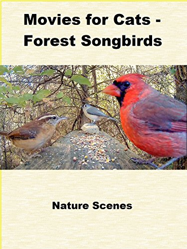 - Movies for Cats - Forest Songbirds