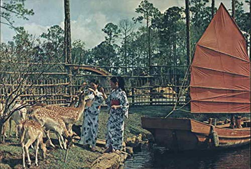 Guides Feed Deer-Marco Polo Park Daytona Beach, Florida Original Vintage Postcard ()