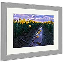 Ashley Framed Prints Daffodils Fild At Sunset And Reflection In Water Scagit Valley Tulip And, Wall Art Home Decoration, Color, 30x35 (frame size), Silver Frame, AG6540493