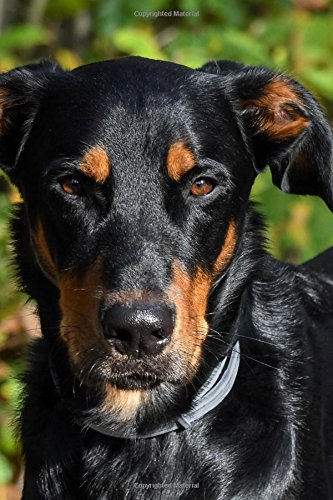 Download Awesome Beauceron Dog Journal: 150 Page Lined Notebook/Diary pdf