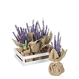 Sullivans 6 Lavander Potted Plant in a Tray 5