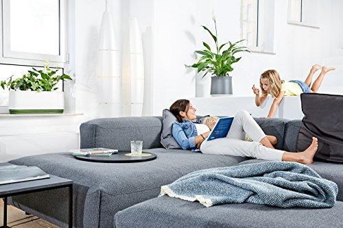 airy hochwirksame luftreinigung mit zimmerpflanzen in stone grey geschenkideen. Black Bedroom Furniture Sets. Home Design Ideas