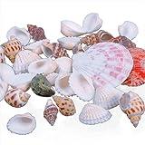 GlobalDeal 100g Mixed Sea Beach Shells Crafts Seashells Aquarium Decor Photo Props Direct