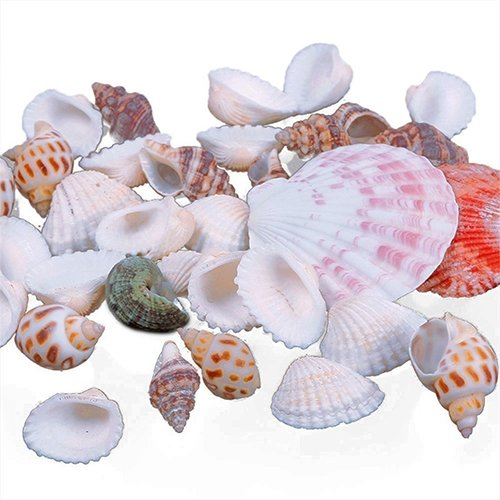 - wsloftyGYd 100g Mixed Sea Beach Shells Crafts Seashells Aquarium Decor Photo Props