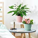 6 Inch Plastic Planters Indoor Set of 5 Flower