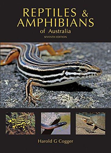 The 8 best amphibian items