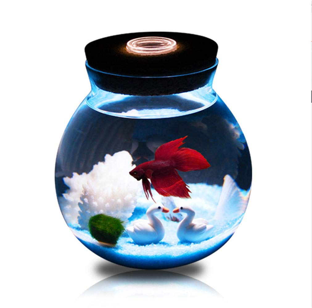Allincluded Creative Mini Glass goldfish Bowl Small Landscape Bucket Fish,Allincluded