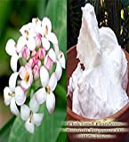 BULK Fragrance Oil - RICE FLOWER & SHEA Fragrance Oil - Warm scent mixes well with shea butter. Top notes of fresh cut ginger root and anise leaves, mid note of coconut milk with base notes of amber musk and sandalwood - By Oakland Gardens (120 mL - 4.0 fl oz Bottle)