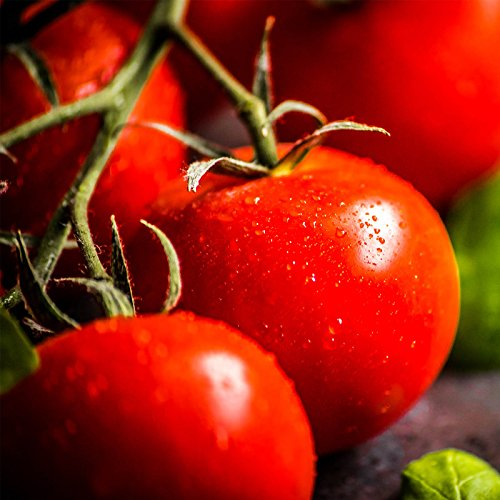 Girl Hybrid Tomato - Tomato Garden Seeds - Bush Early Girl Hybrid - 100 Seeds - Non-GMO, Vegetable Gardening Seed