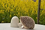 water heater birds - Ceramic Pet Water Heater Hedgehog Mute Kettle Small Pet Water Drinking