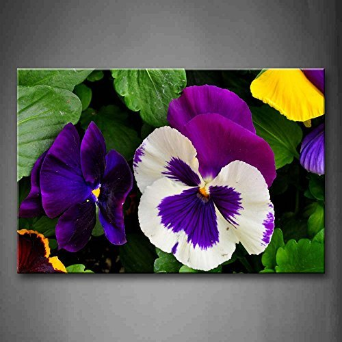 Pansy Flower Pictures (EZON-CH Modern Art Pansy In Purple White And Yellow Wall Art Painting Print On Canvas Flower Pictures For BedroomStretched and Framed For Home)