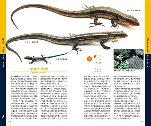 日本 トカゲ 種類