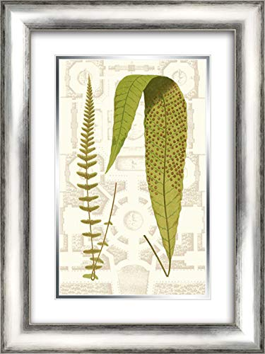 Garden Ferns III 18x24 Silver Contemporary Wood Framed and Double Matted Art Print by Vision Studio (Garden Fern Wood)