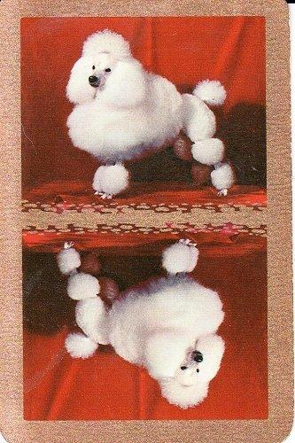 Amazon.com: Un solo Swap Juego de cartas color blanco Poodle ...