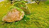 NWFashion 6 X 20G Dress Tree Flower Static Grass