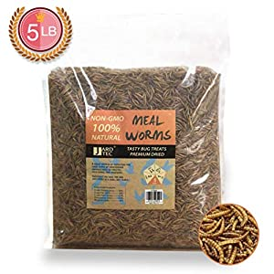 JARDTEC Non-GMO Dried Mealworms – 100% Natural Treats for Birds Chickens Hedgehog Hamster Fish Reptile Turtles, 5 lb