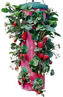Felknor Ventures TT091112 Topsy Turvy Strawberry Planter