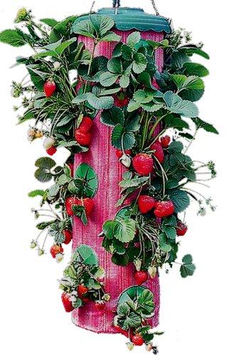 Topsy Turvy Strawberry Planter