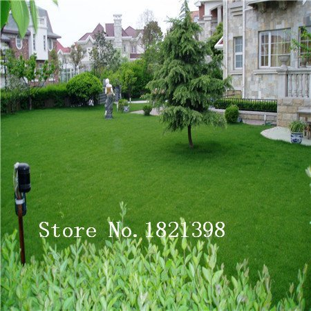 Garden Plant Lawn Turf Seed 500pcs Grass Seeds Fresh Green Soft Runner Turfgrass for home park soccer golf place free shipping B by Generic