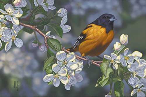 Oriole and Apple Blossoms by Jeffrey Hoff Art Print, 15 x 10 inches