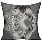 Shing Animal Animals Baby Animals Cat Cute Kitten Kittens Mirror Nature Reflection Double Side Print Living Room Decor White One Size Throw Pillow Square 18'' X 18''inch