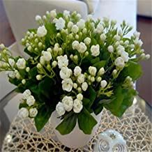10seeds Potted flower seeds Jasmine seeds Fragrant Balcony Bonsai Plant For Garden & Home Easy to grow