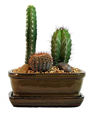 cactus pot. Black Bedroom Furniture Sets. Home Design Ideas
