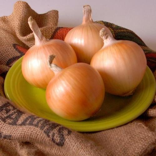 Texas Grano 1015Y Onion 200+ Heirloom Vegetable Seeds for sale  Delivered anywhere in USA
