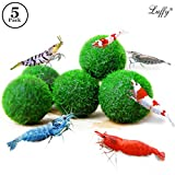 """6 Nano Marimo Moss Balls by Luffy (0.6"""") --- Provide Essential Nutrients - Filter & Purify Tank Water - Beautiful, Low Maintenance Aquatic Plants - Perfect for Shrimps to play and feed on"""