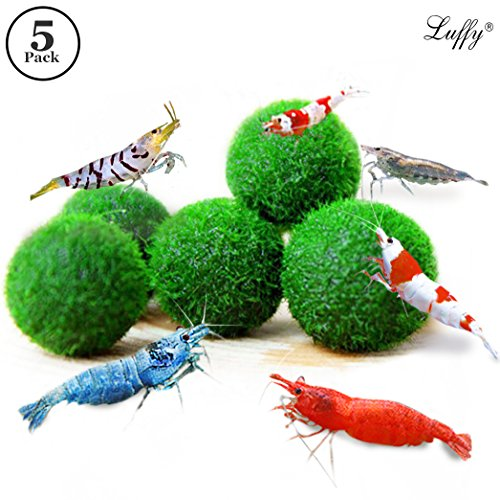 Aquarium Nano Freshwater (5 LUFFY Shrimp Balls - Instantly Purify Water for Shrimps: Beautiful & Easy Live Plant: Provide micro-nutrients for Shrimps to Feed on)