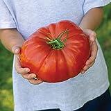 Tomato - Gigantomo - 10 Seeds