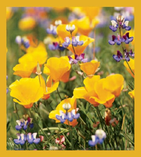 California Poppies Magnetic Bookmark