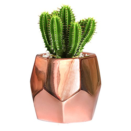 GeLive Hexagon Rose Gold Succulent Planter, Ceramic Geometric Cactus Plant Pot, Modern Window Box with Drainage Hole, Home Accent Décor (Hexagon ()