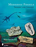 img - for Mesozoic Fossils I: Triassic & Jurassic Periods book / textbook / text book