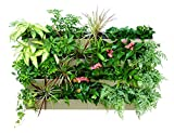 Self Watering Planter for Vertical Gardens – Indoor, Outdoor Wall Decor & Gardening Kit with Hanging Bracket - Plants Thrive with No Effort, Ideal for Busy Lifestyles - BloomWall (6, Cream)