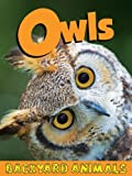 Owls, Nick Winnick, 1605969532